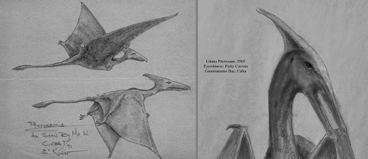 similar sketches of a living pterosaur in Cuba